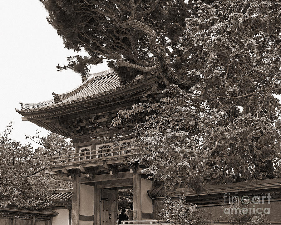 Japanese_tea_garden Photograph - Japanese Tea Garden Pagoda In Sepia. Golden Gate Park by Connie Fox