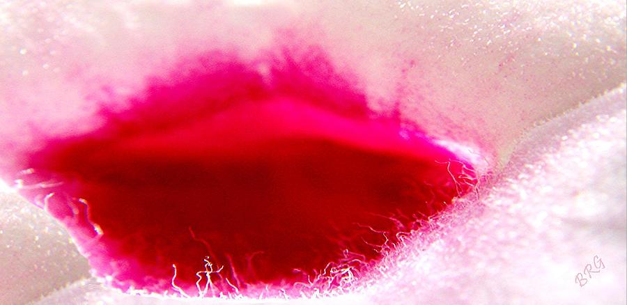 Abstract Photograph - Jasmine Kiss by Ben and Raisa Gertsberg
