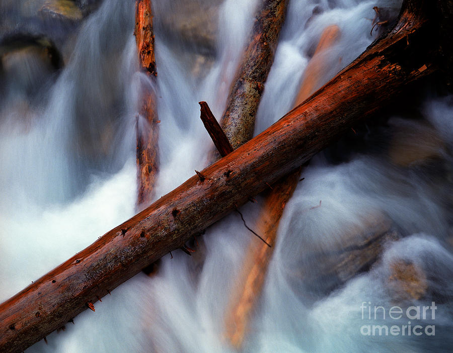 Logs Photograph - Jasper - Beauty Creek Logs by Terry Elniski