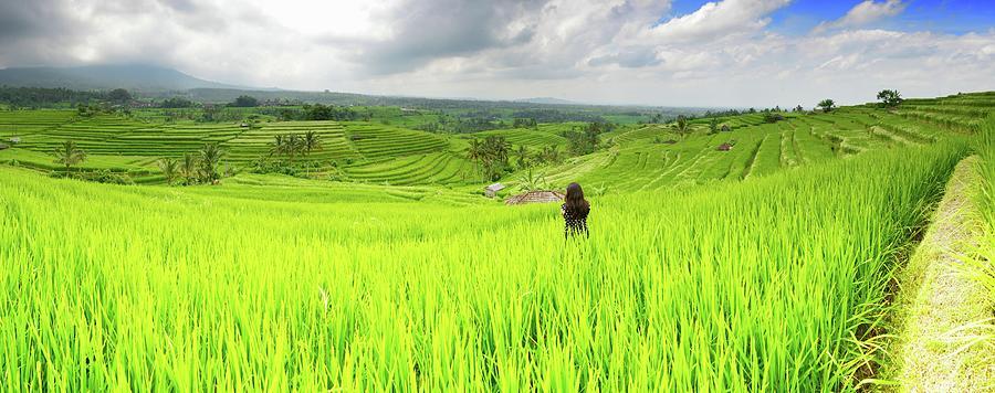 Jatiluwih Rice Fields Photograph by Paul Biris