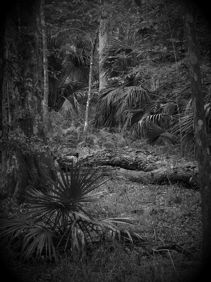 Black Photograph - Jb Starkey Number 2 by Phil Penne