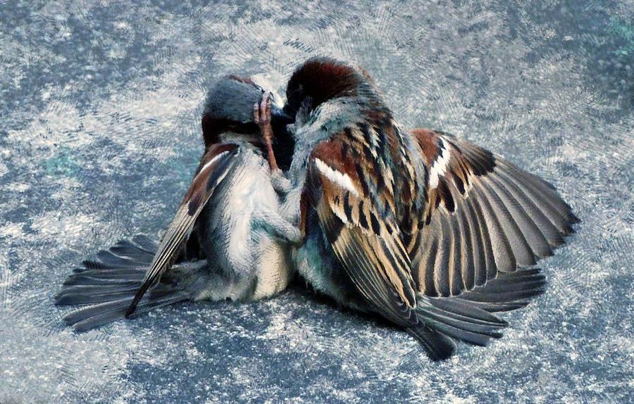Sparrow Photograph - Jealous Guys by Steve Taylor