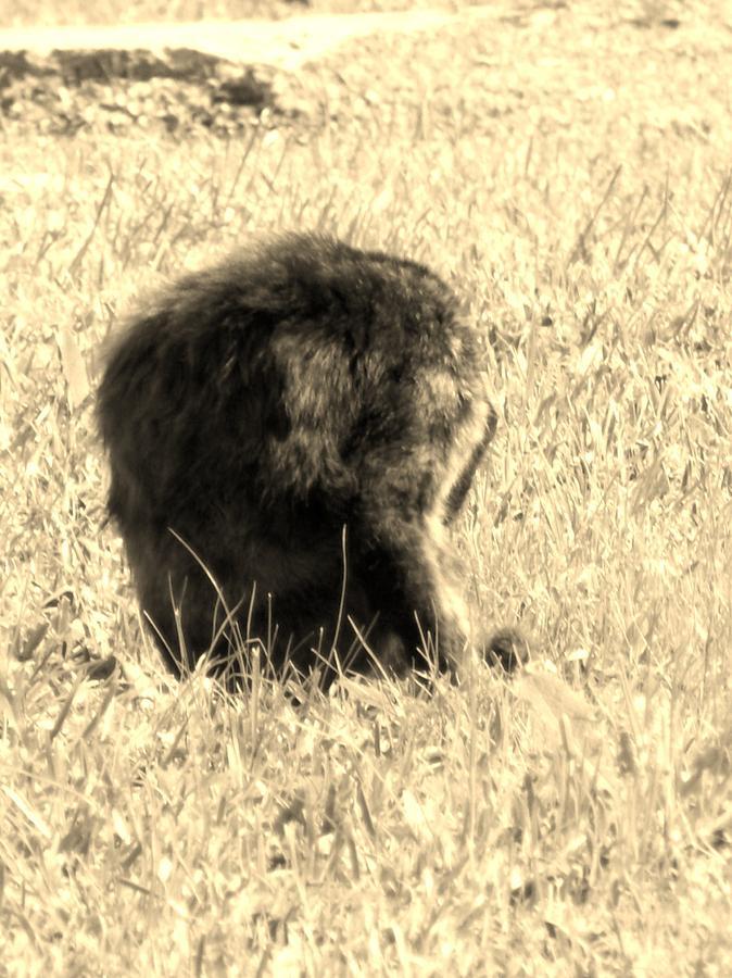 Halloween Photograph - Jean Lafittes Headless Graveyard Cat by John Glass