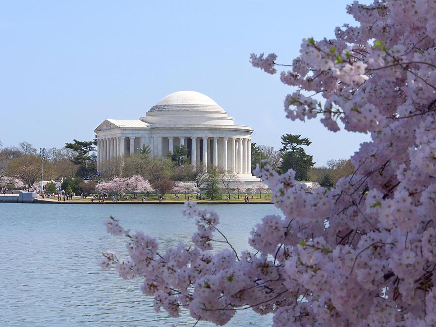 Landmarks Photograph - Jefferson Memorial - Cherry Blossoms by Mike McGlothlen