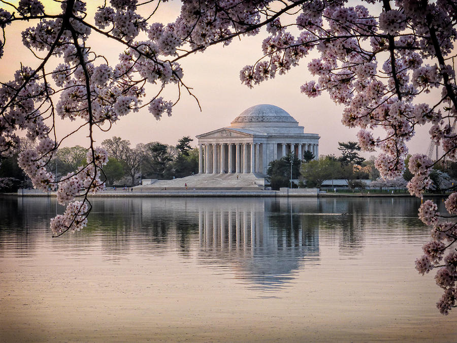 Jefferson Memorial framed by spring Cherry Blossoms by Victoria Porter