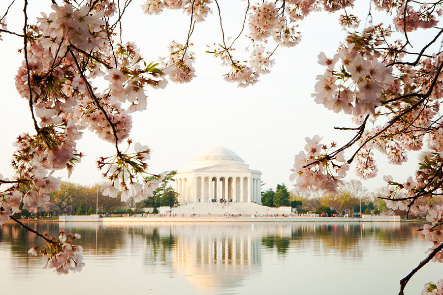 Cherry Photograph - Jefferson Memorial With Reflection And Cherry Blossoms by Susan Schmitz