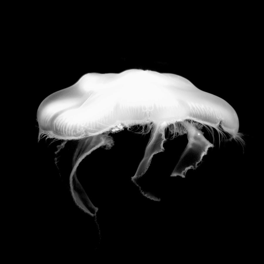 jelly by Jeremiah John McBride