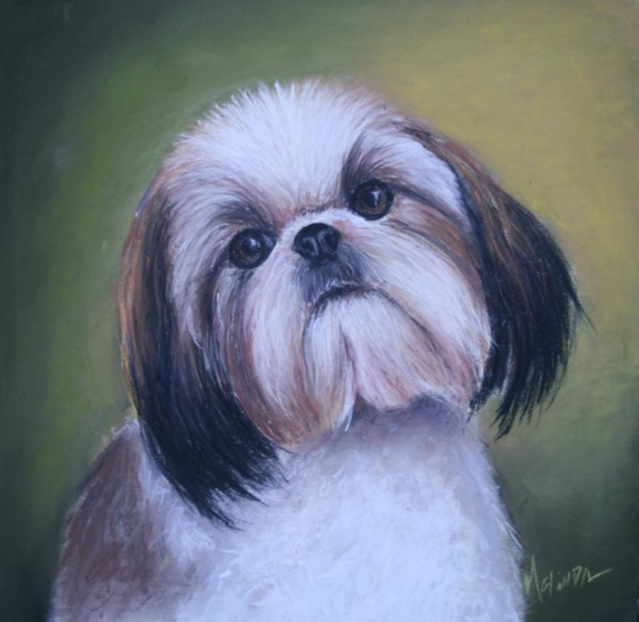 Dog Painting - Jenny Wren Shih Tzu Puppy by Melinda Saminski