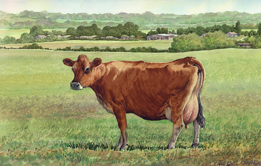 Watercolor Painting - Jersey Cow by Anthony Forster