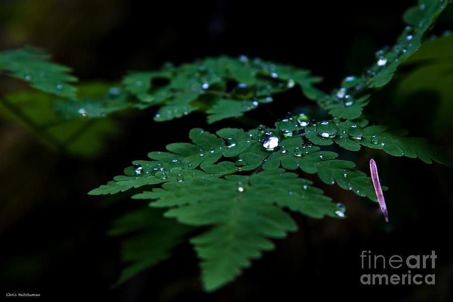 Fern Photograph - Jeweled Fern by Chris Heitstuman
