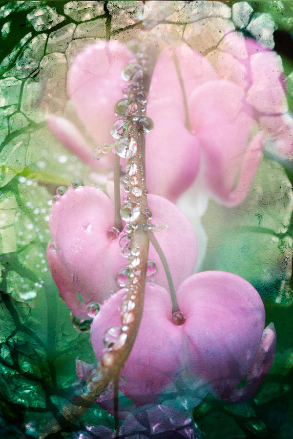 Jewels On Hearts Photograph