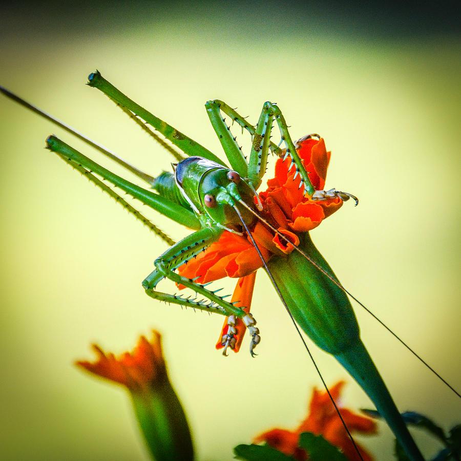 Cricket Photograph - Jiminy Cricket by Wally Taylor
