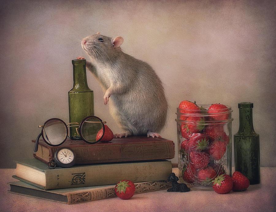Still Life Photograph - Jimmy  :) by Ellen Van Deelen