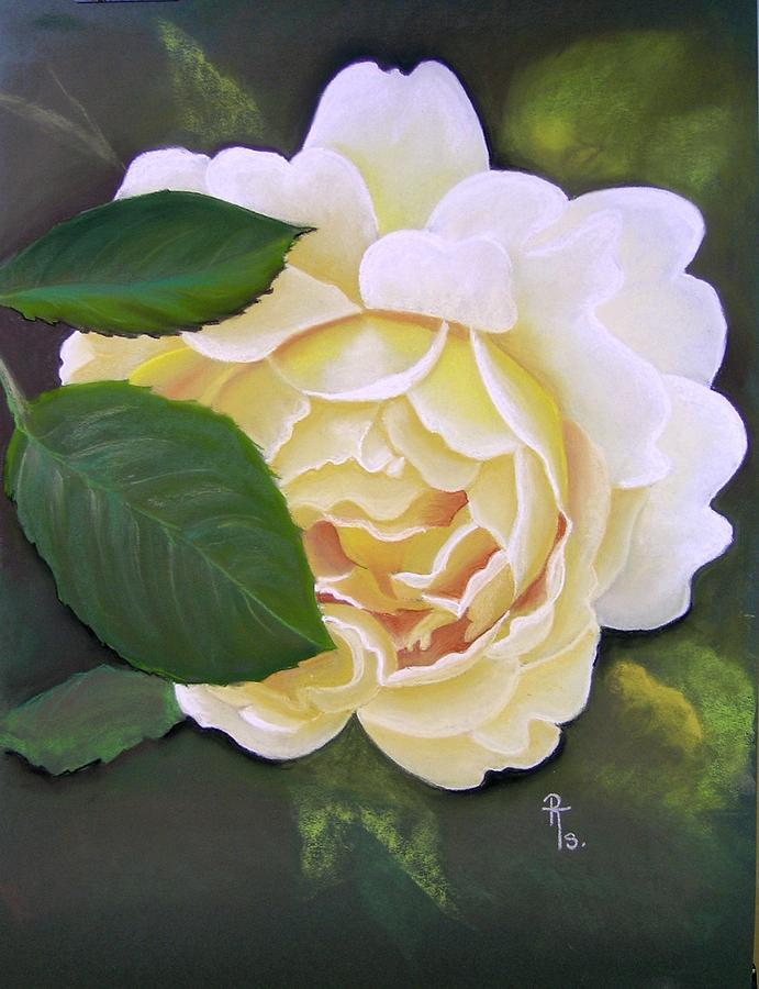 Cream Rose Pastel - Joanne by Rosemarie Temple-Smith
