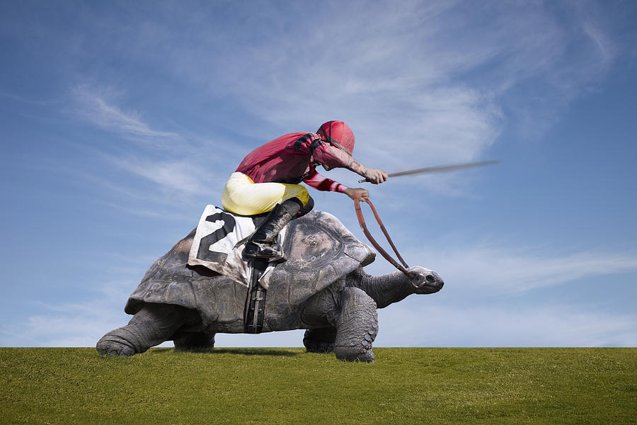 Jockey Over A Turtle Photograph by Buena Vista Images