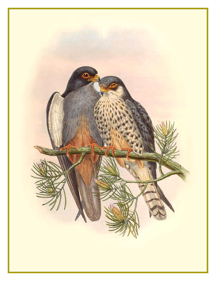 Antique Painting - John Gould Birds by Gary Grayson