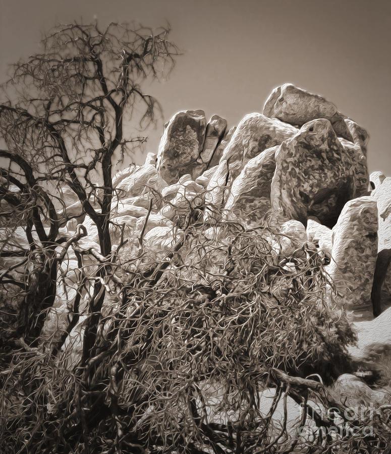 Joshua Tree Photograph - Joshua Tree - 07 by Gregory Dyer