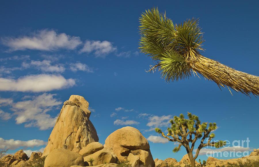 Joshua Tree Rocks And Sky Photograph by Yva Momatiuk John Eastcott