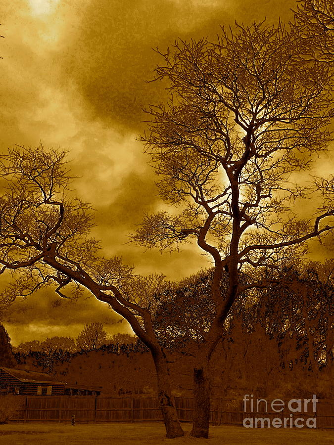 Trees Photograph - Joshua Tree by Qs House of Art ArtandFinePhotography