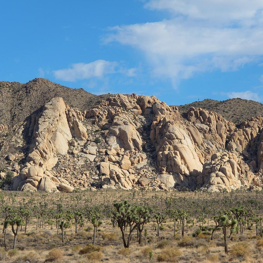 Desert Photograph - Joshua Tree by Keith May