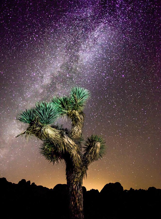 Joshua Tree Photograph - Joshua Tree Vs The Milky Way by Robert  Aycock
