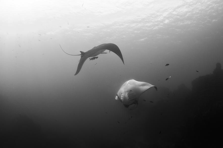 Animals Photograph - Joy by David Valencia