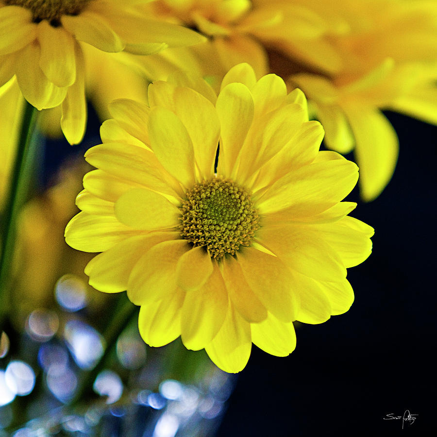 Flowers Photograph - Joy by Scott Pellegrin