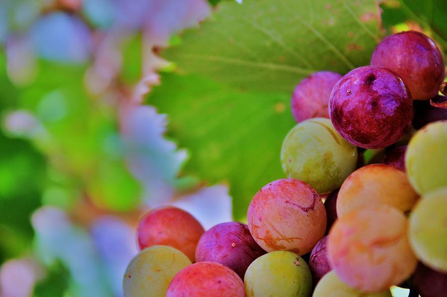 Wine Photograph - Juicy by Ericka Adabashi
