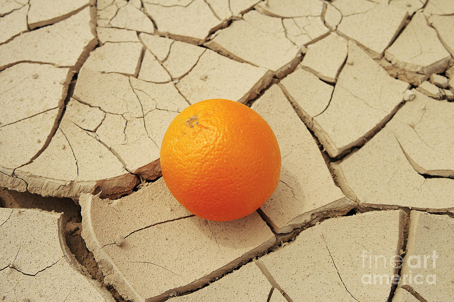 Vegetarian Photograph - Juicy Orange And Drought. by Alexandr  Malyshev