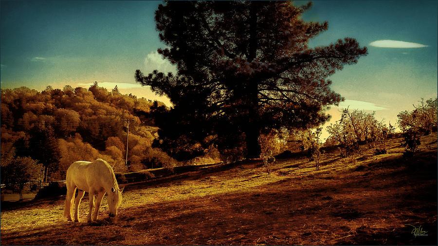 Springtime California Landscape by Douglas MooreZart