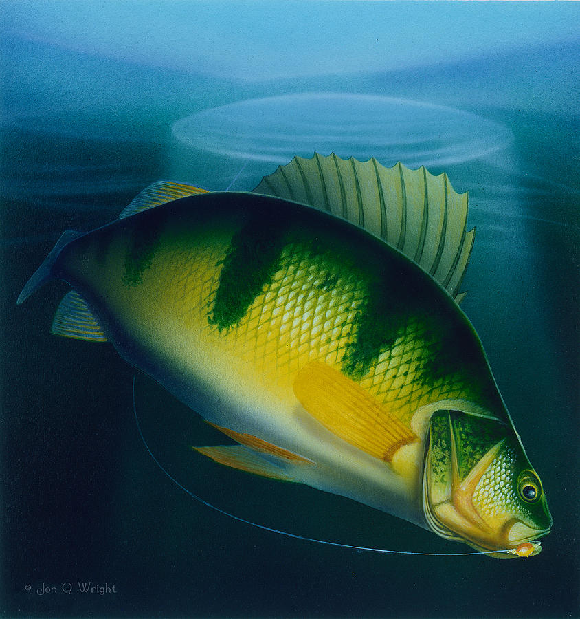 Jumbo perch ice fishing painting by jq licensing for Ice fishing for perch