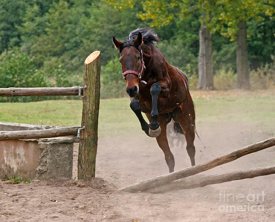 Horse Photograph - Jump Jump by Angel  Tarantella