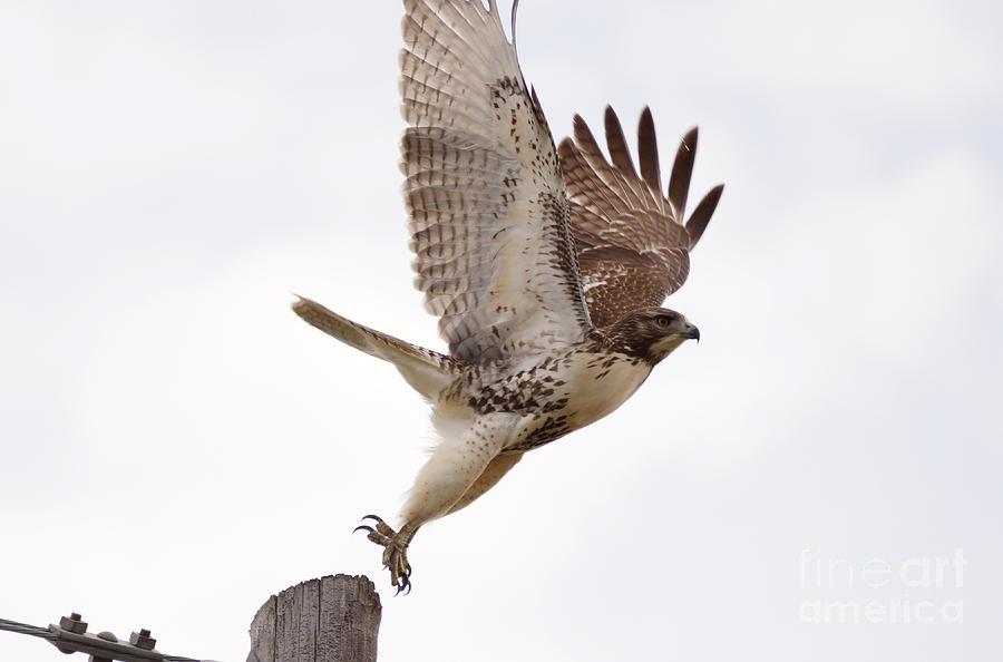 Birds Photograph - Jump by Lori Tordsen