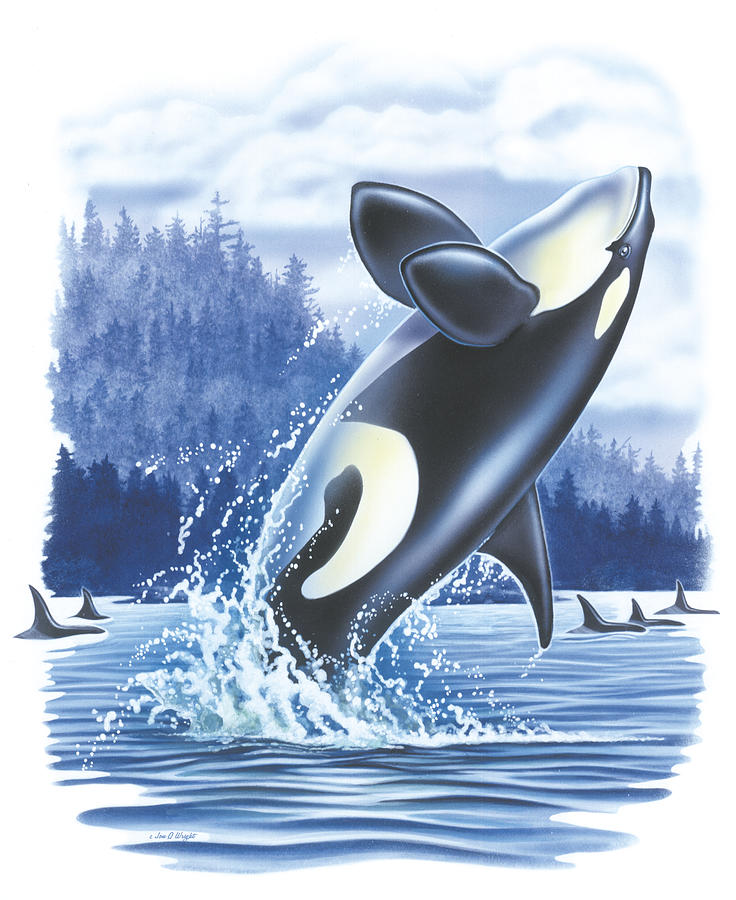 Jon Q Wright Painting - Jumping Orca by JQ Licensing