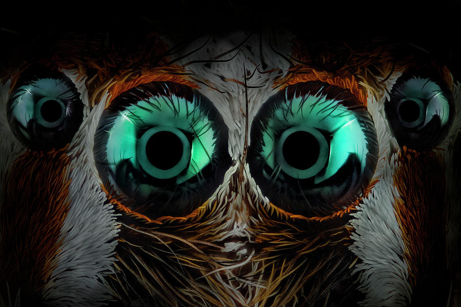 Macro Photograph - Jumping Spider Eyes by Javier Rup?rez
