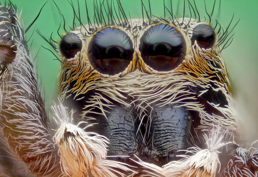 Animal Photograph - Jumping Spider by Nicolas Reusens