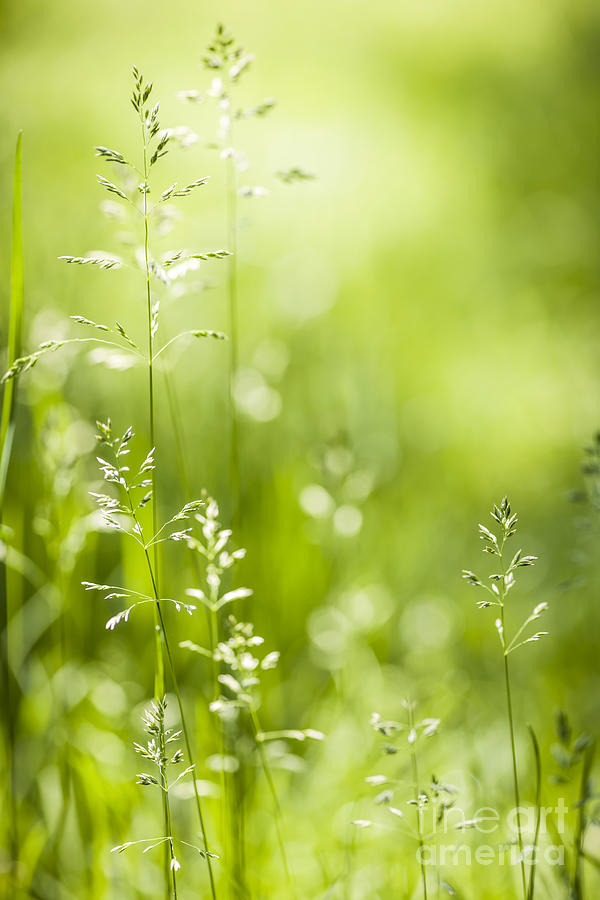 Green Photograph - June Green Grass  by Elena Elisseeva