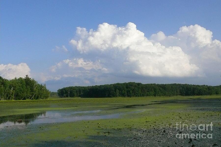 Algae Photograph - June Reservoir by Betsy Cotton