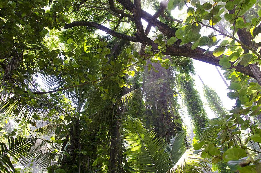 Jungle Canopy Photograph By Daniel Murphy