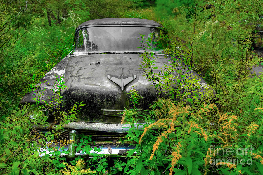 Cars Photograph - Jungle Fever Vintage Chevy by Brenda Giasson