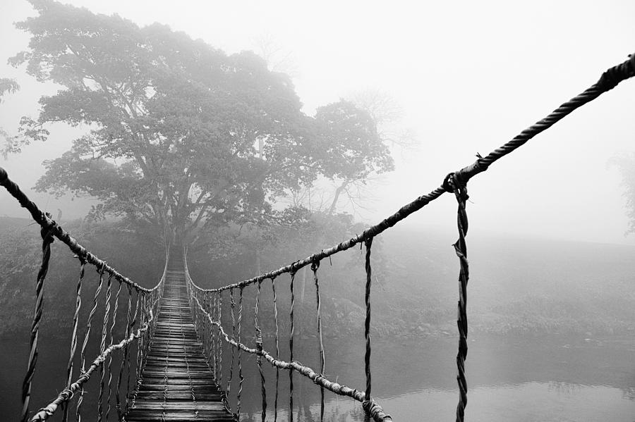 Absence Photograph - Jungle Journey 5 by Skip Nall