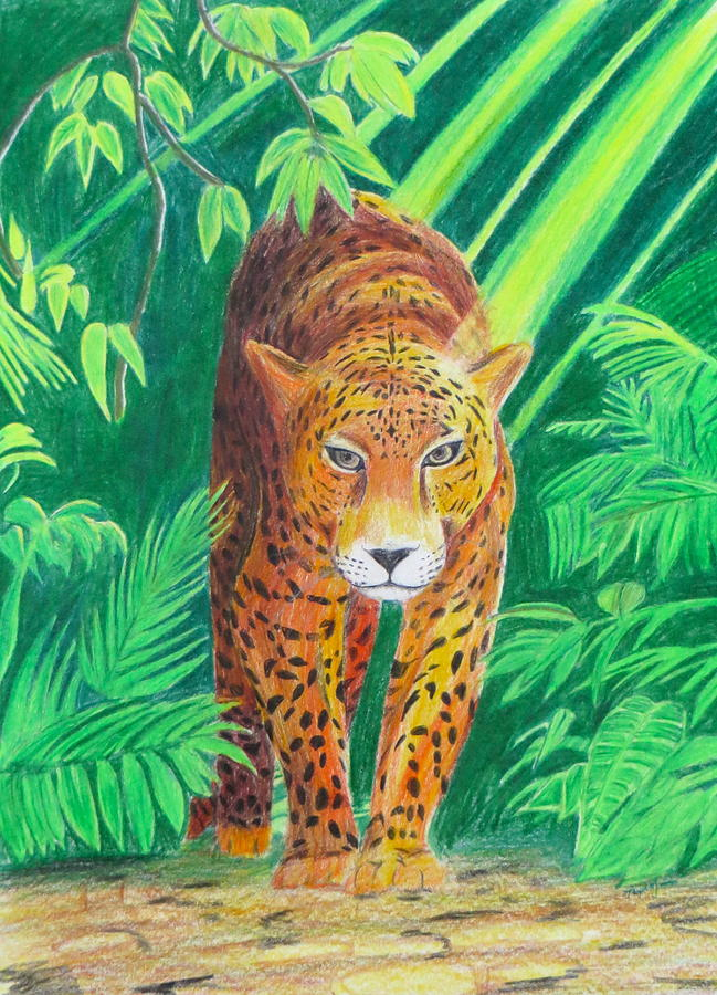 Jungle Leopard Drawing By Artistic Indian Nurse