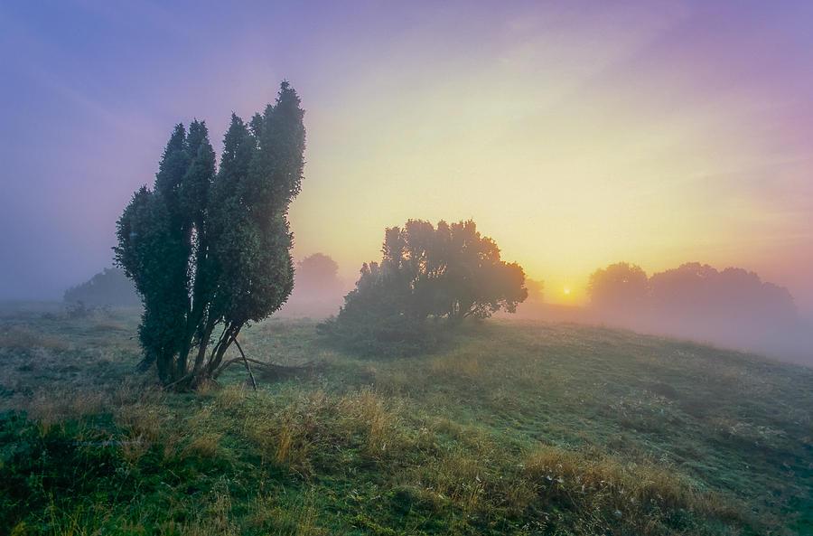 Juniper Photograph - Juniper Trees In Early Morning Fog  by Martin Liebermann