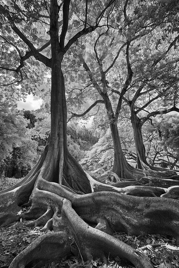 Jurassic Trees in Infrared by Michael Yeager