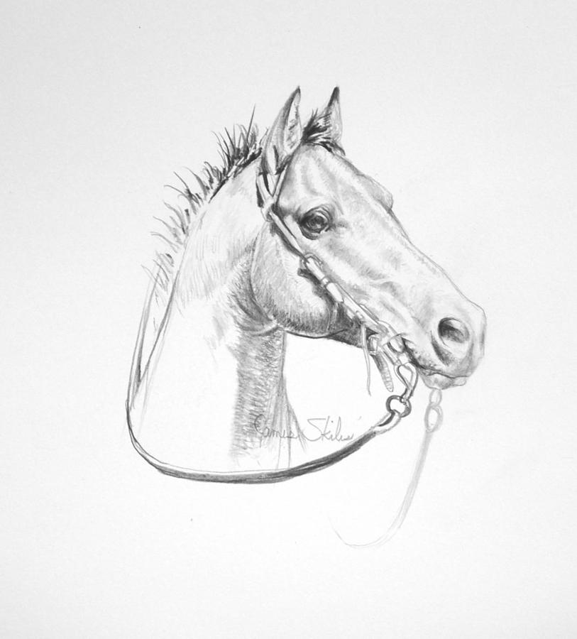 Horse Drawing Drawing - Just A Little Wild by James Skiles