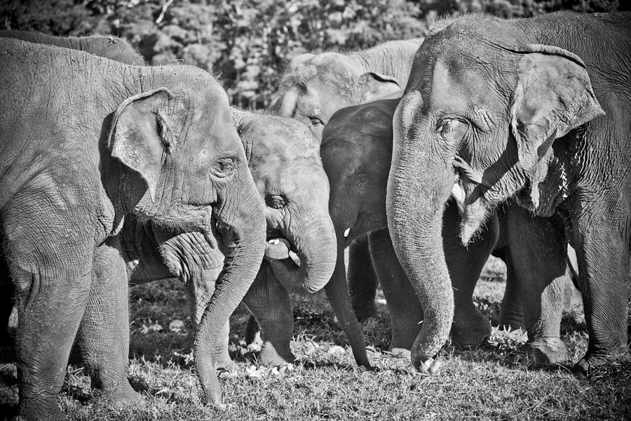 Elephant Photograph - Just A Moment by Steve Smith