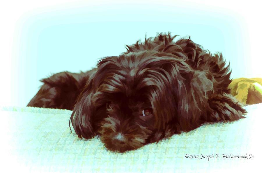 Pet Photograph - Just Chillin by Joe McCormack Jr