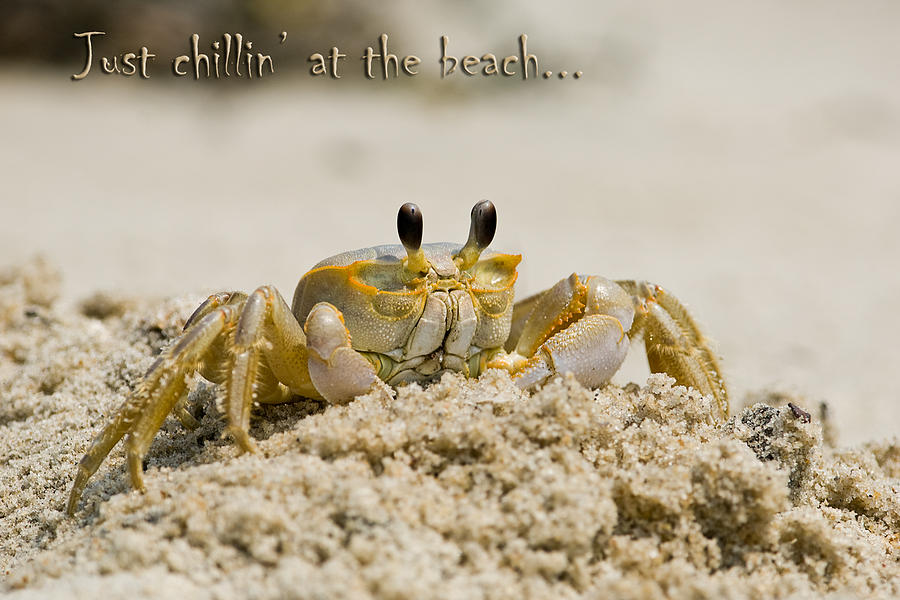 Greeting Card Photograph - Just Chillin On The Beach by Jeff Abrahamson