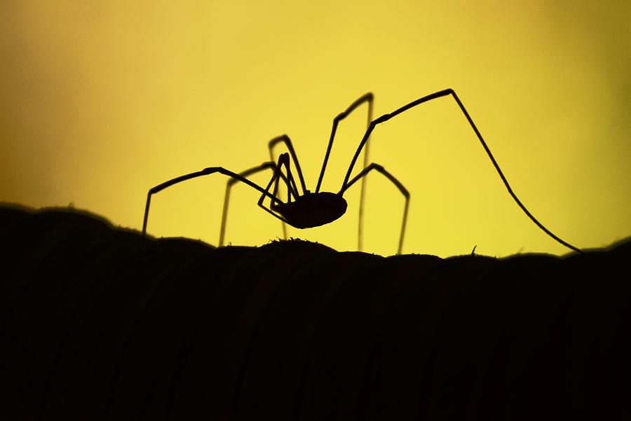 Spider Photograph - Just Creepy by Lori Tambakis
