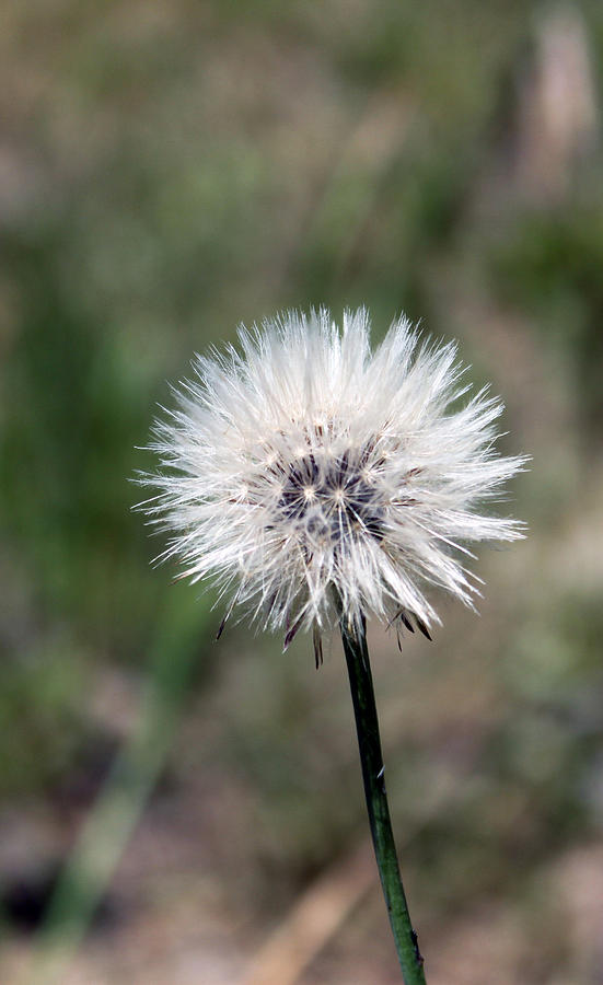 just dandy by Evelyn Patrick